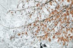 Dia de inverno perfeito Foto de Stock