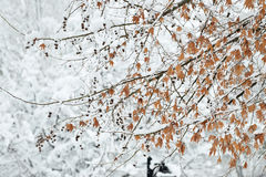 Dia de inverno perfeito Foto de Stock Royalty Free