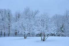 Dia de inverno quieto Fotos de Stock