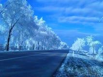 dia de inverno sob o sol imagens de stock royalty free
