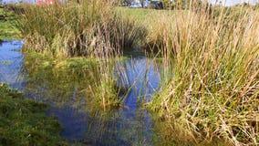Dia de invernos claro ensolarado da associação/lagoa do charneca Foto de Stock
