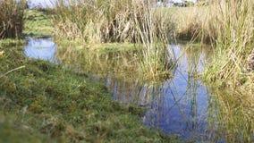 Dia de invernos claro ensolarado da associação/lagoa do charneca Imagens de Stock