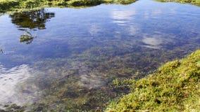 Dia de invernos claro ensolarado da associação/lagoa do charneca Fotografia de Stock