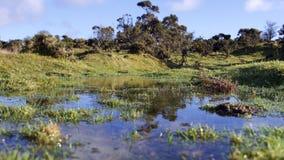 Dia de invernos claro ensolarado da associação/lagoa do charneca Imagem de Stock Royalty Free