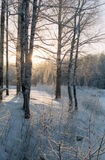 Dia de janeiro na floresta Fotos de Stock Royalty Free