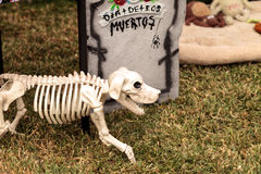 Dia de los Muertos alter. Los Angeles, CA, USA - October 29, 2016: Flower and skeleton dog, cat and bird alter at Dia de los Muertos, Day of the dead, in Los Stock Images