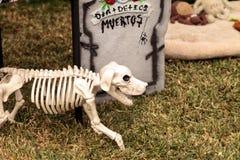 Dia de los Muertos changent Images stock