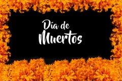 Dia De Los Muertos Flor de cempasuchil, Dag van de Doden die in México aanbieden stock afbeeldingen