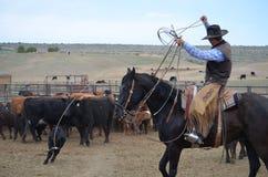 Dia de marcagem com ferro quente com um vaqueiro americano Fotografia de Stock
