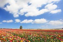 Dia de mola nebuloso em Israel Imagem de Stock Royalty Free