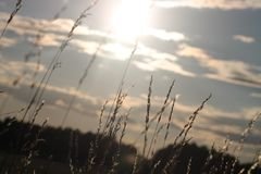 Dia de Sunny Summer na Suécia Fotos de Stock