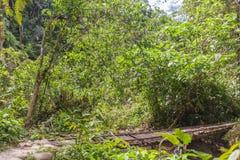 Dia de Suny no parque nacional Yasuni, Equador fotografia de stock