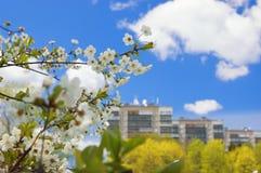 Dia de verão bonito Foto de Stock