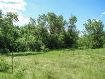 Dia de verão ensolarado da natureza com céu azul Fotos de Stock Royalty Free