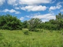 Dia de verão ensolarado da natureza com céu azul Fotografia de Stock