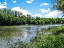 Dia de verão ensolarado da natureza com céu azul Imagem de Stock Royalty Free