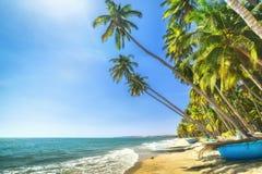 Dia de verão ensolarado do coco perto da praia em Binh Thuan Fotos de Stock