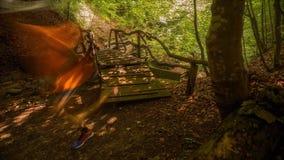 Dia de verão morno nas madeiras Timelapse video estoque