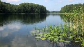 Dia de verão no lago remoto da floresta vídeos de arquivo