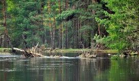 Dia de verão no rio calmo Fotos de Stock