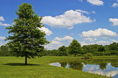 Dia de verão perfeito Fotografia de Stock Royalty Free