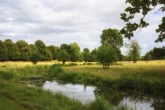 Dia de verões inglês do campo com córrego e folha verde luxúria Foto de Stock Royalty Free