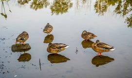 Dia de verões morno em Ohio do nordeste imagens de stock royalty free