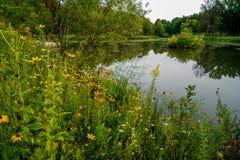 Dia de verões morno em Ohio do nordeste imagens de stock