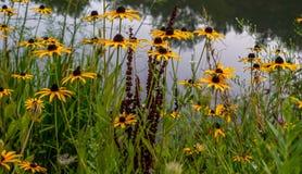 Dia de verões morno em Ohio do nordeste fotografia de stock