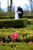 Dia do casamento Imagens de Stock
