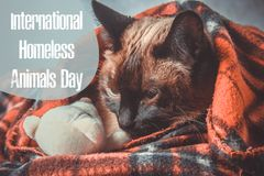 Dia do mundo de animais dispersos 18 August International Homeless Animals Day fotografia de stock royalty free