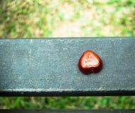 Dia do ` s de Art Valentine da foto Fotografia de Stock Royalty Free