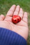 Dia do ` s de Art Valentine da foto Imagem de Stock Royalty Free