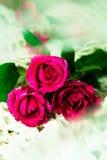 Dia do `s do Valentim Imagens de Stock Royalty Free