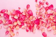 Dia do `s do Valentim Pétalas das flores de Rosa no fundo branco Fundo do dia de Valentim Configuração lisa, vista superior, espa fotos de stock royalty free