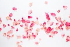 Dia do `s do Valentim Pétalas das flores de Rosa no fundo branco Fundo do dia de Valentim Configuração lisa, vista superior, espa foto de stock
