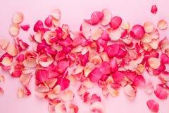Dia do `s do Valentim Pétalas das flores de Rosa no fundo branco Fundo do dia de Valentim Configuração lisa, vista superior, espa fotografia de stock