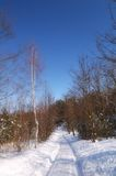 Dia do sol do inverno Fotos de Stock Royalty Free