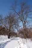 Dia do sol do inverno Imagem de Stock Royalty Free