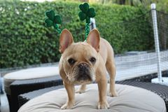 Dia do St Patrick feliz fotografia de stock