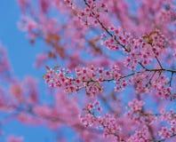 Dia do Valentim Flores cor-de-rosa de florescência bonitas Imagem de Stock Royalty Free