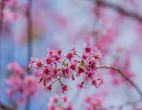 Dia do Valentim Flores cor-de-rosa de florescência bonitas Foto de Stock