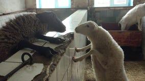 Dia dos animais do amor bom Foto de Stock