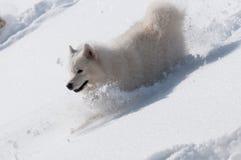 Dia downhills in een sneeuw Stock Afbeeldingen