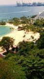 Dia e floresta da praia fotografia de stock royalty free