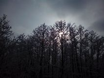 Dia enevoado do inverno na floresta fotografia de stock royalty free