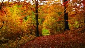 Dia ensolarado bonito na floresta dourada do outono fotos de stock