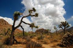 Dia ensolarado bonito no parque nacional de árvore de Joshua Fotos de Stock Royalty Free