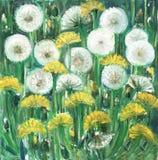 Dia ensolarado brilhante de tiragem, flores amarelas dos dentes-de-le ilustração royalty free