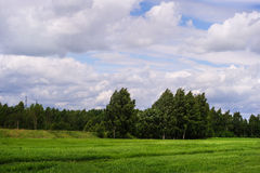 Dia ensolarado da mola no campo verde Foto de Stock Royalty Free